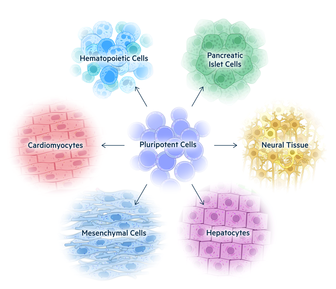 U Cells Assets Technology Pluripotent Stem Cells desktop